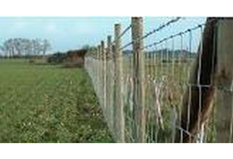 STOCK FENCING & NETTING